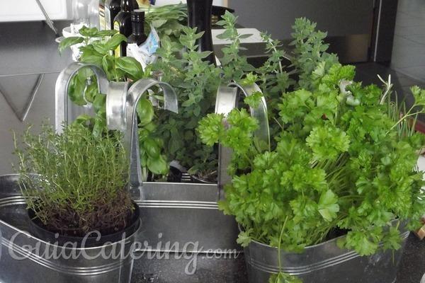 Plantas aromáticas para cultivar en casa
