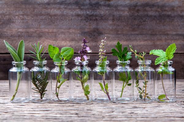 Plantas aromáticas que podemos cultivar en casa